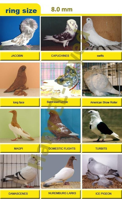 Ring Size Chart - Imported Pigeon Ring's in Pakistan